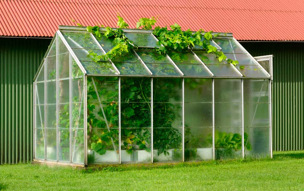 comprar mini invernadero pequeño vidrio
