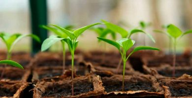 comprar mini invernadero portátil semillero